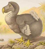 The Dodo, a bird of Mauritius, became extinct during the mid-late seventeenth century after humans destroyed the forests where the birds made their homes and introduced animals that ate their eggs.