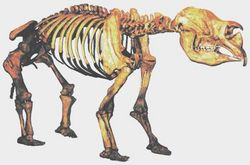 The Diprotodon became extinct around 50,000 years ago.